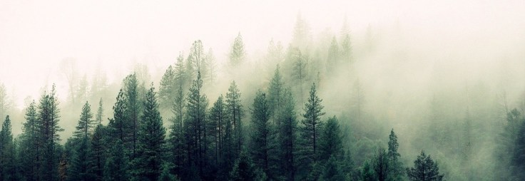 nature-forest-trees-fog_cr